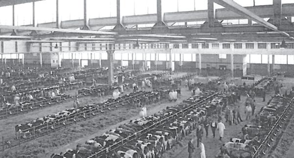 Blick in die Alte Rindermarkthalle in früheren Zeiten.